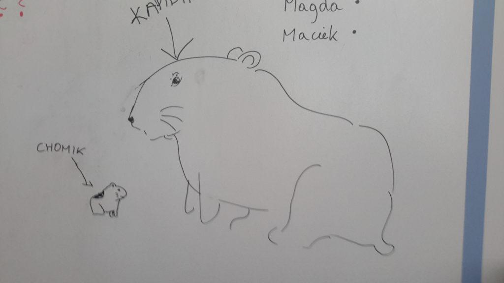 """Na obrazku dwa patrzące na siebie pulchniutkie zwierzątka, jedno bardzo duże, drugie bardzo małe. Przy małym strzałka z podpisem """"chomik"""", przy dużym strzałka z podpisem """"kapibara""""."""