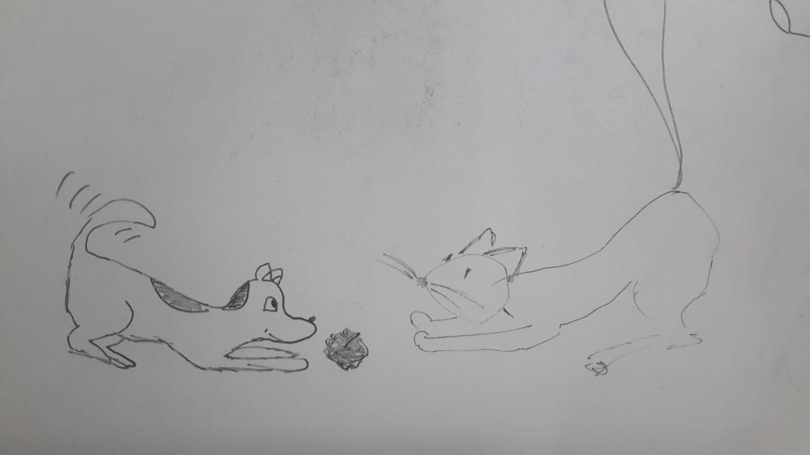 Rzucisz piłeczkę? (Jak pies z kotem – odcinek 16)