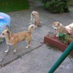 Dokąd idą psy, gdy odchodzą?