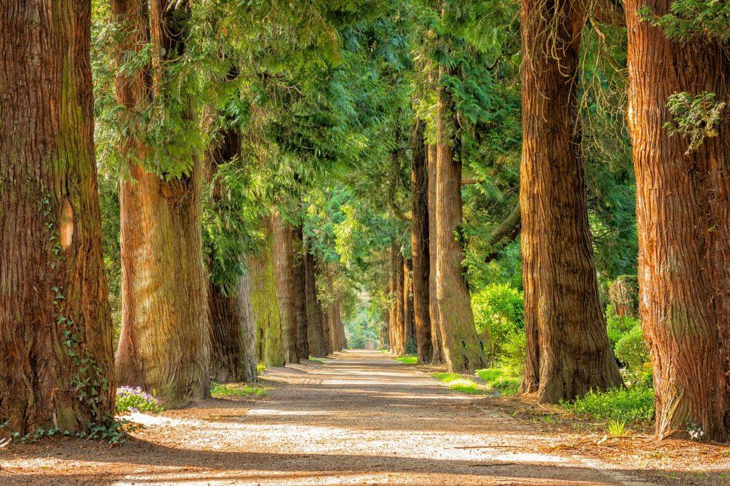 """""""Przyjemność ma się do szczęścia mniej więcej tak, jak drzewa do ogrodu: nie ma ogrodu bez drzew, ale drzewa, nawet w wielkiej ilości, nie stanowią jeszcze ogrodu"""". W. Tatarkiewicz - cytat na dziś"""