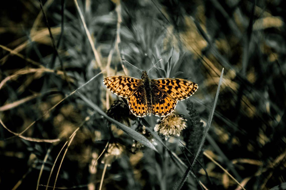 Motyl w koleinie
