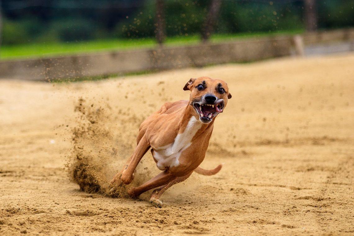 Życie jest jak tor wyścigowy