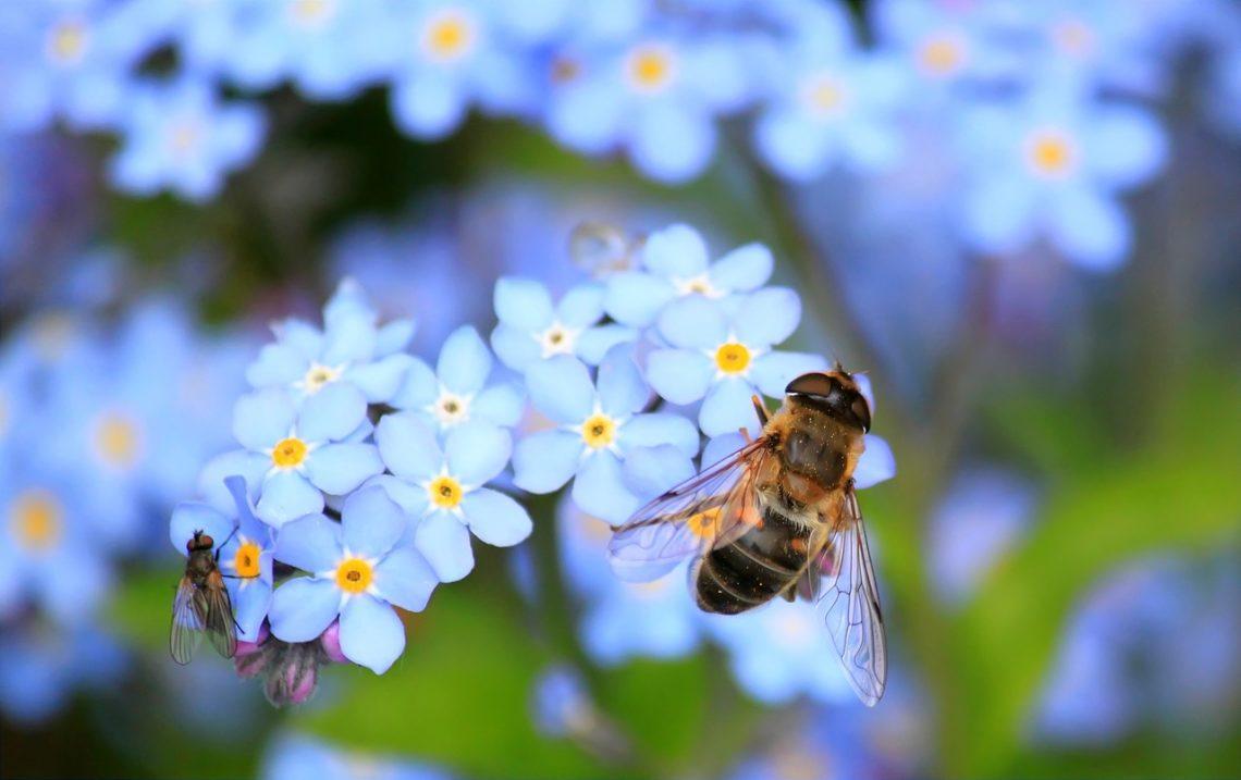 Nie spieszmy się jak pszczoły