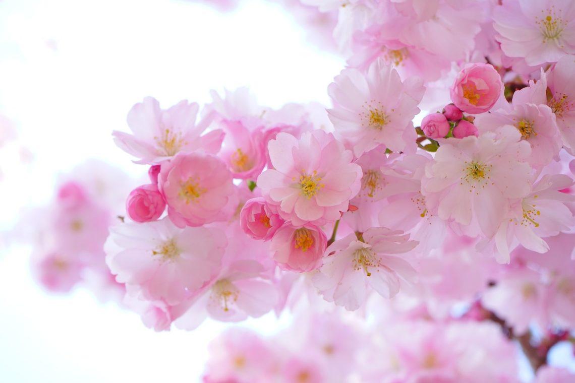 Zważ, że im kwiat delikatniejszy…