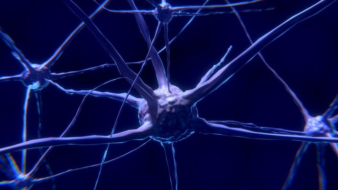 Paradoks neuroplastyczności