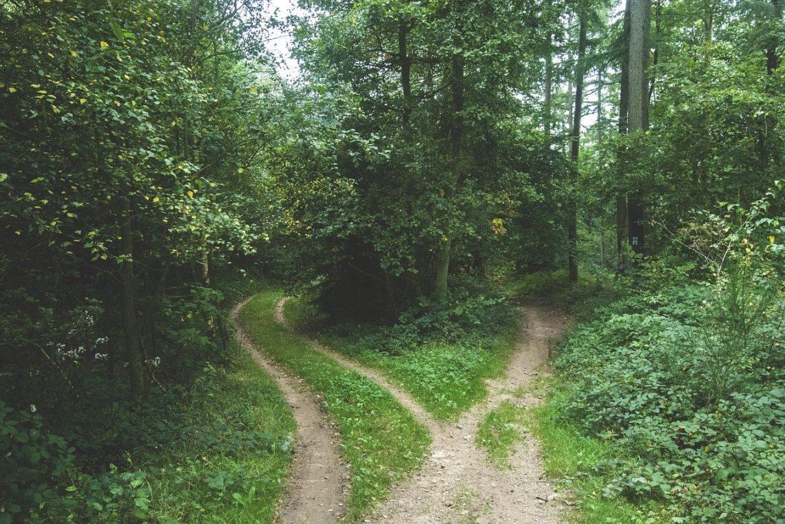 Gdy stanąłem w lesie na rozstaju dróg