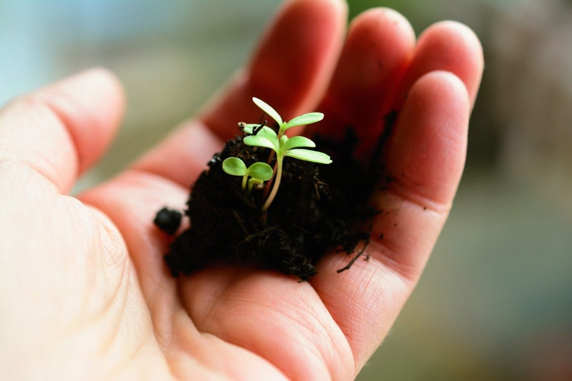 Jest czas sadzenia i czas wyrywania