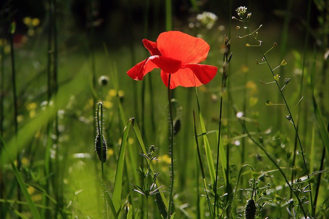 Gdyby kwiatek potrafił mówić