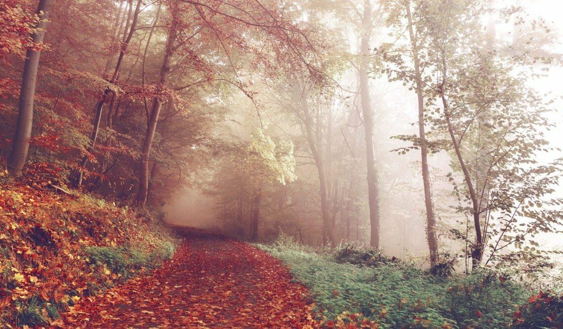 Życie, jak jesień