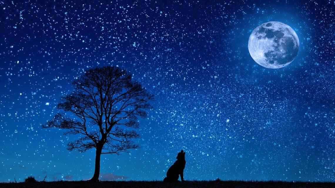 Pewnej nocy